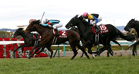 【阪神カップ2017】人気馬&特注馬追い切り(調教)タイム