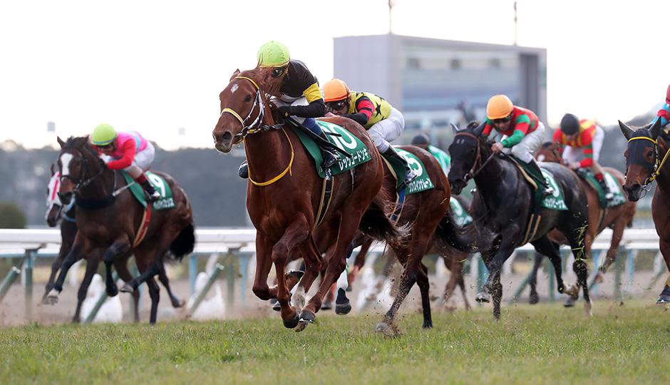 無料ドンズバ予想【京都牝馬ステークス2018】&明日のズバ馬