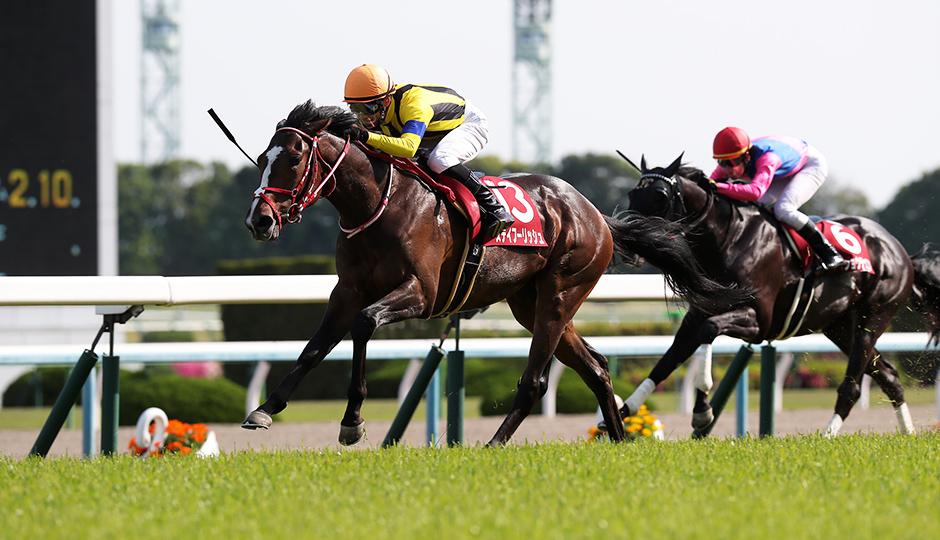 無料ドンズバ予想【京都新聞杯2019】明日のズバ馬